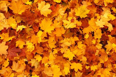 Jesień w Nałęczowie